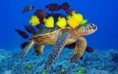 Turtle with Several Fish
