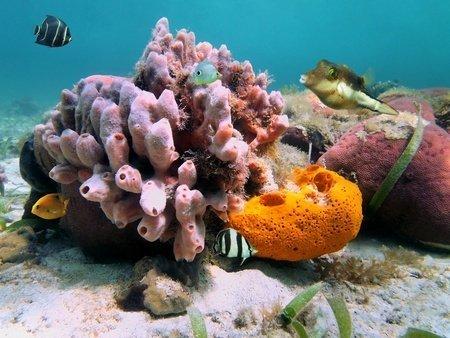 Cayman Islands SCUBA Dive Sites